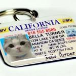 custom name tags name badges used as pet tags
